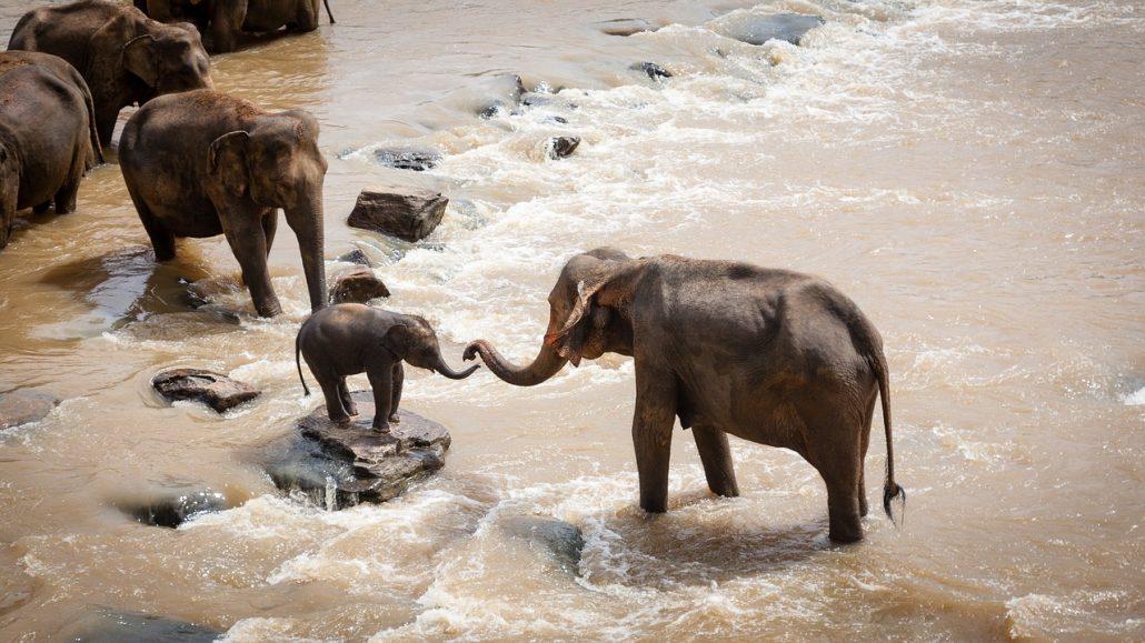 elephants-1900332_1280