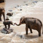 La métaphore de l'éléphant