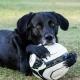Le chien du prospect